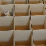 やはりネコといったら段ボール箱!個性によってどんな動きを見せてくれるのか楽しみですw