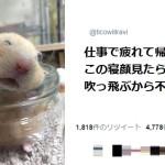 samuneiyasarehamuchan11